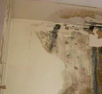 black mold removal in Salt Lake City