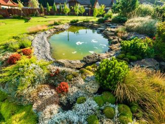 Backyard landscape