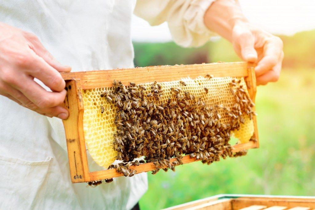 getting a honeycomb