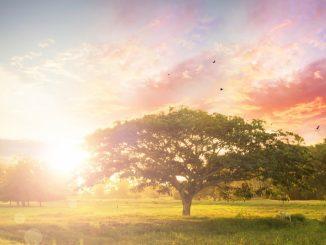 sunlight peeking through trees