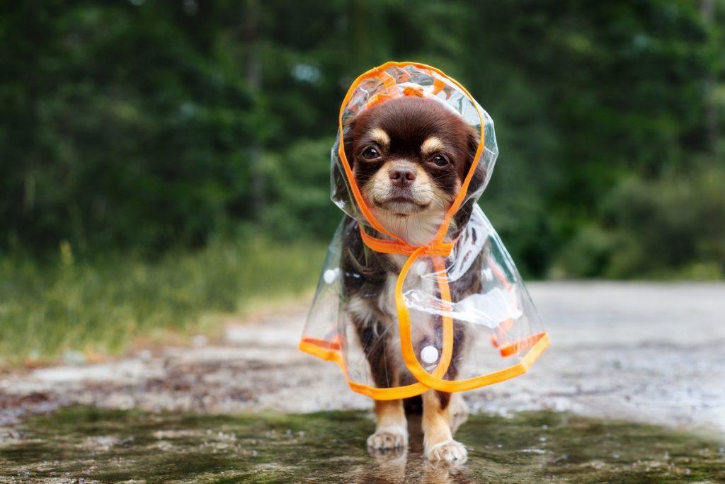 dog wearing a raincoat