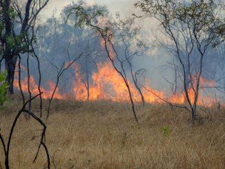 bushfire in Australian outback Nitmiluk National Park, Northern Territroy, Australia