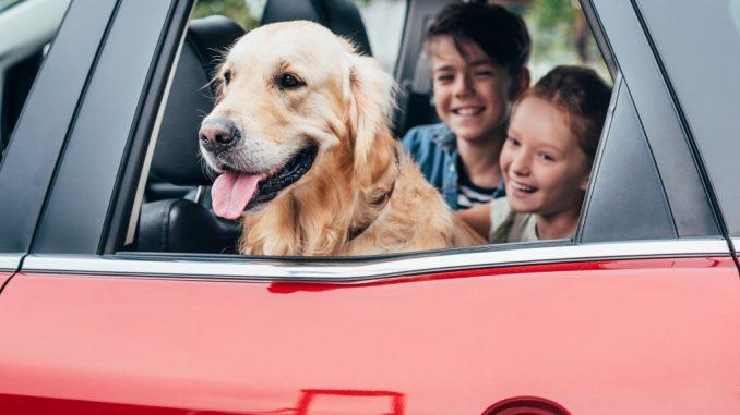kids inside a car